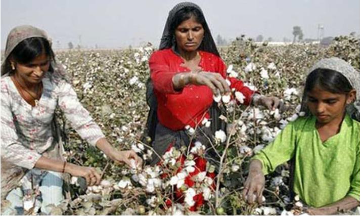 صنعت پنبه در پاکستان
